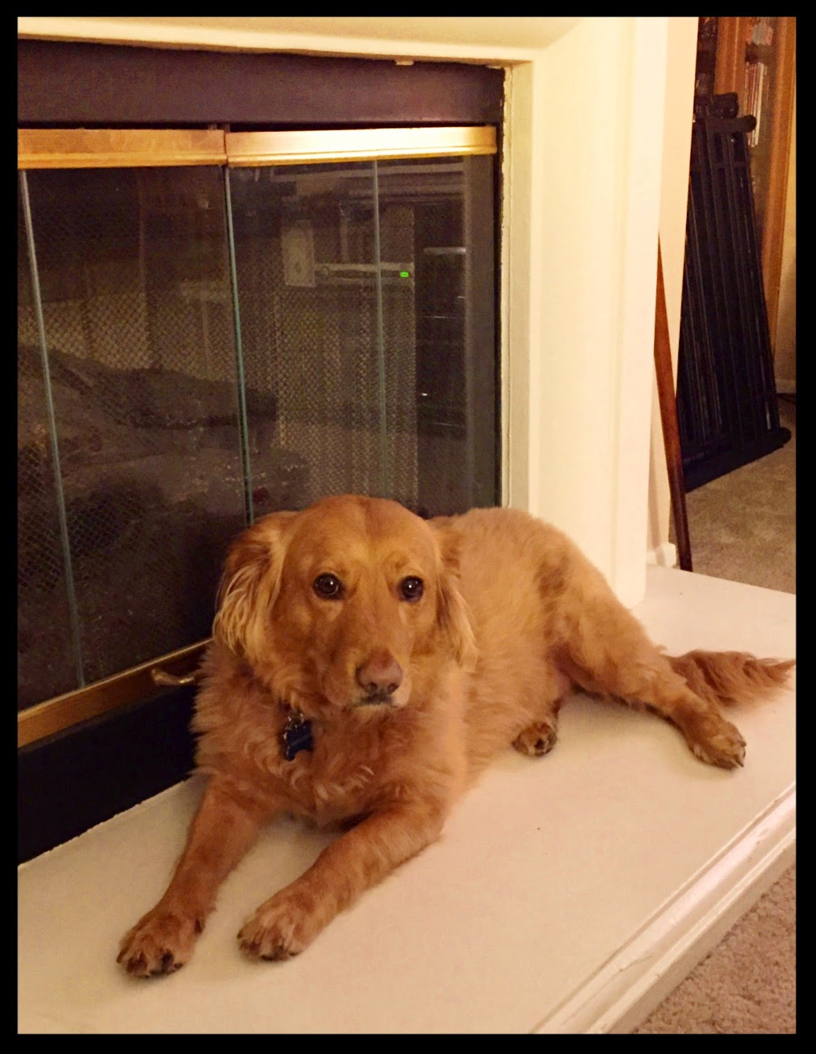 dog on the hearth at The 3 Rs Blog