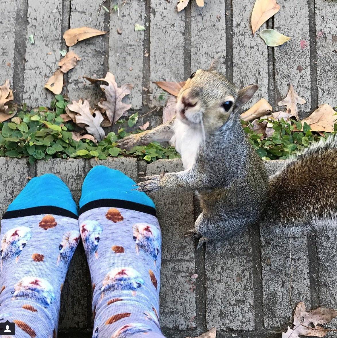 squirrel suitor