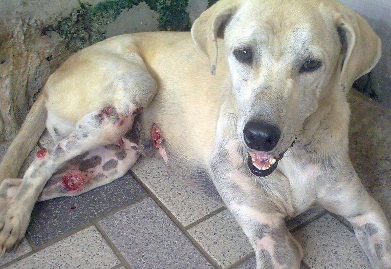 dog bone cancer - HD1600×1200