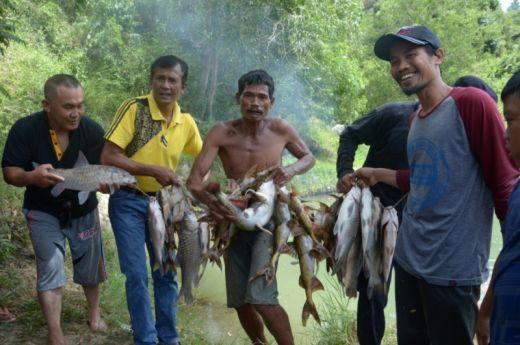 Mangadou Tradisi Menangkap Ikan Yang Unik Di Sawah Lunto