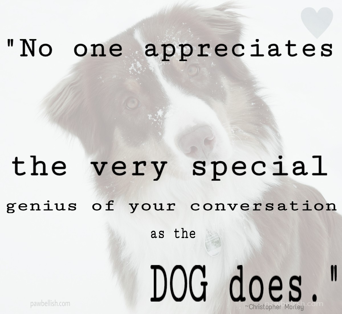 Quote about dogs appreciating your conversation