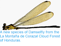 http://sciencythoughts.blogspot.co.uk/2014/05/a-new-species-of-damselfly-from-la.html