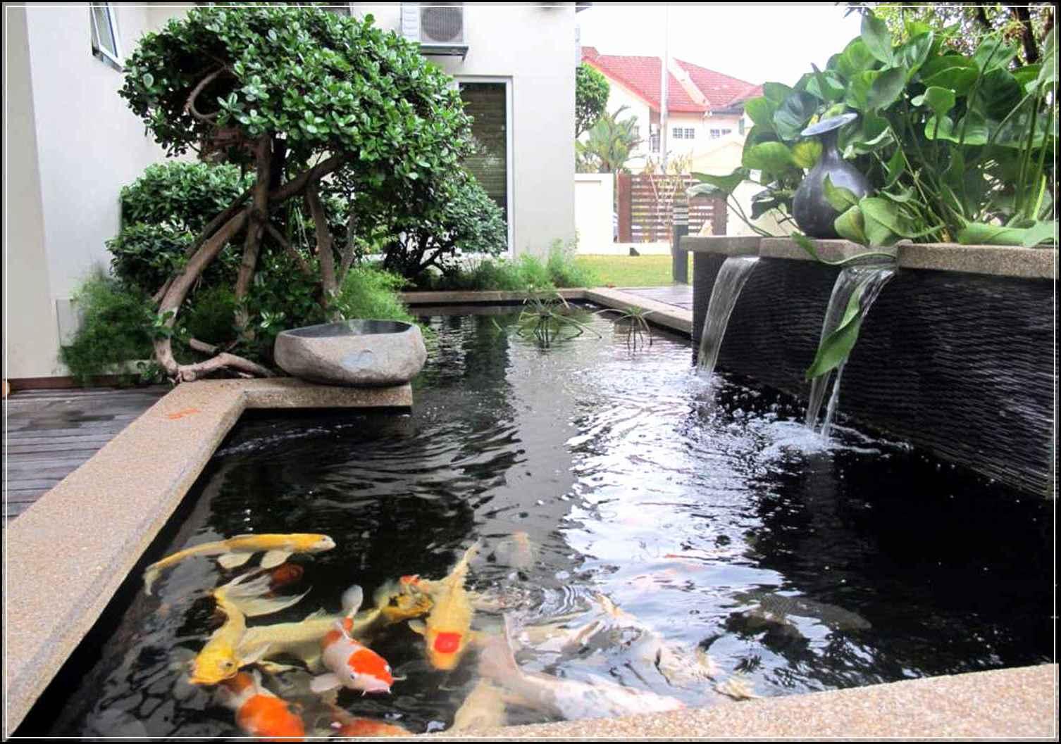 Cara Membuat Kolam Ikan Minimalis Sederhana yang Mudah