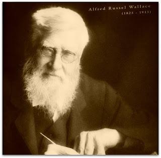 Alfred Russel Wallace (Museu de Ciência e Tecnologia da PUCRS)