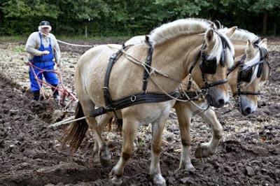 άλογα αγορά