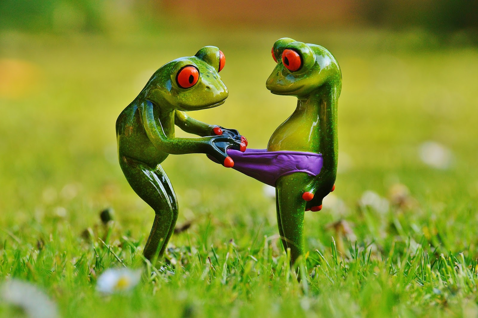 A funny picture of a frog looking at a stomach of another frog.
