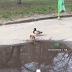 У Харкові помітили плаваючих в калюжі качок (Відео)