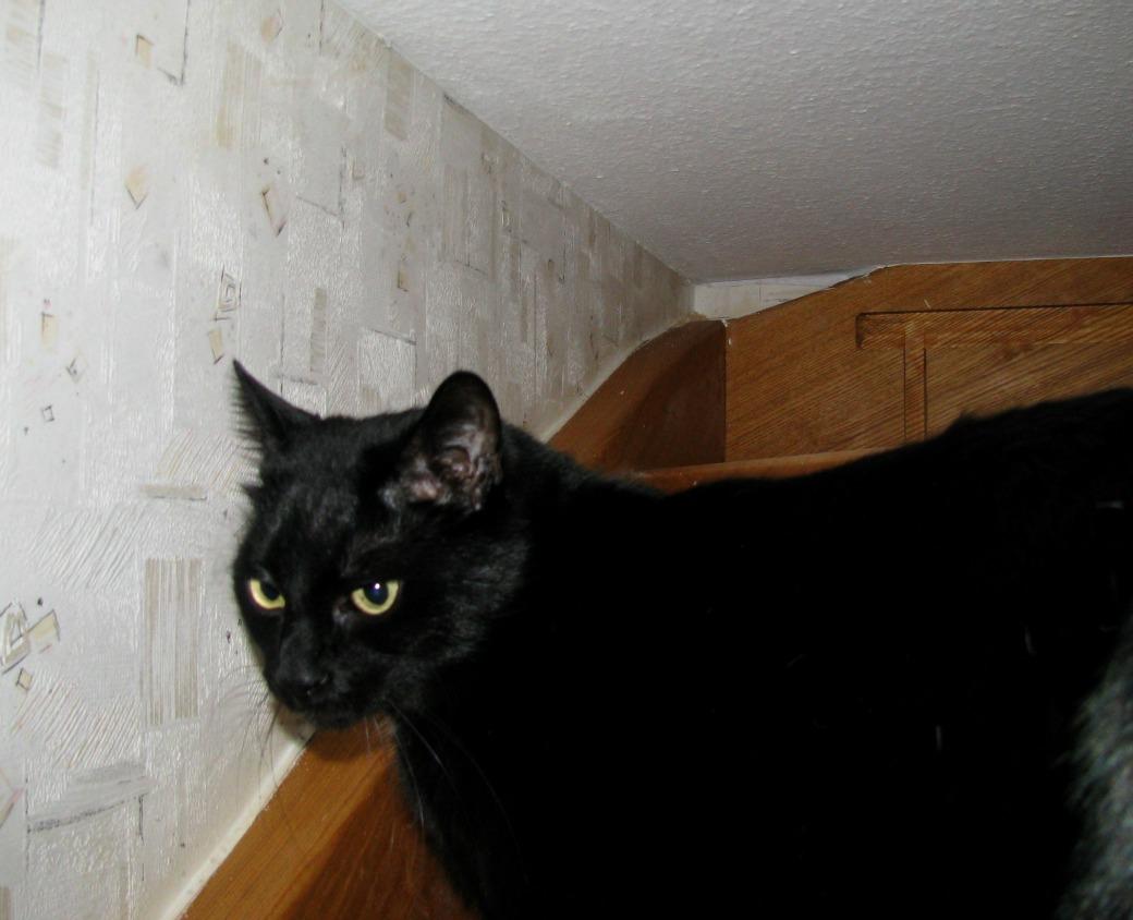 Ponder - the cat: Stairway to .... huh???