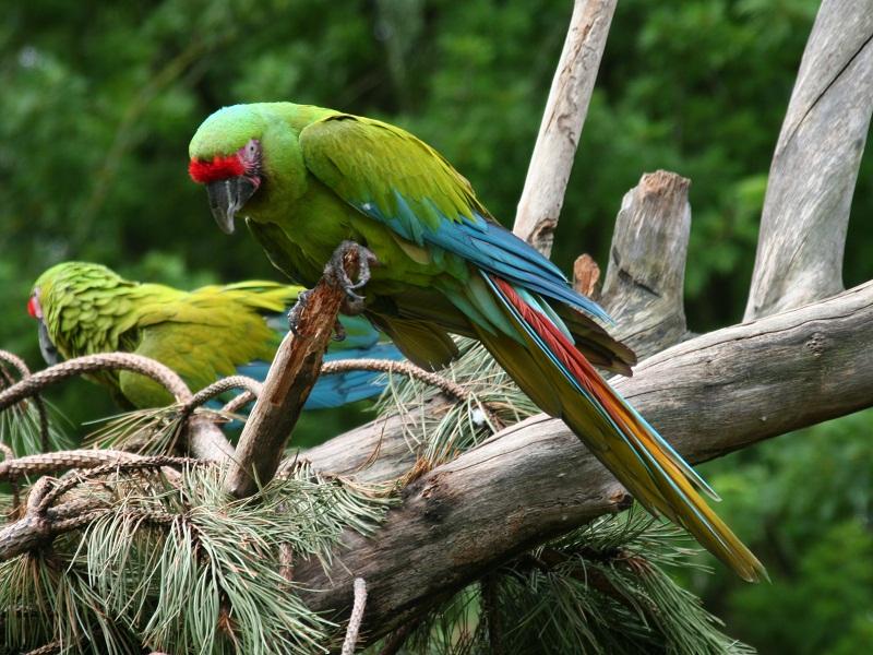 Review Wisata : Maharani Zoo Lamongan