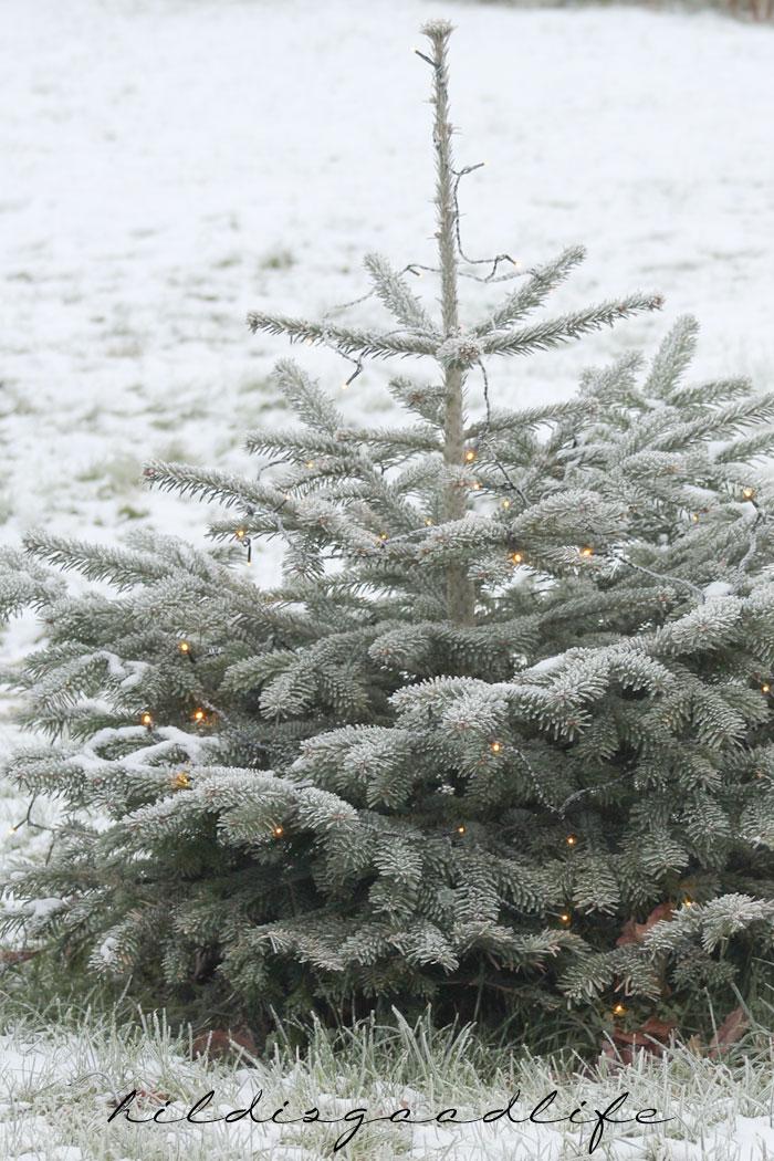 Outdoor Dekoration mit Frost und Schnee