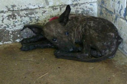 No one has stepped up, her horrible and painful life will end with 'euth' at shelter