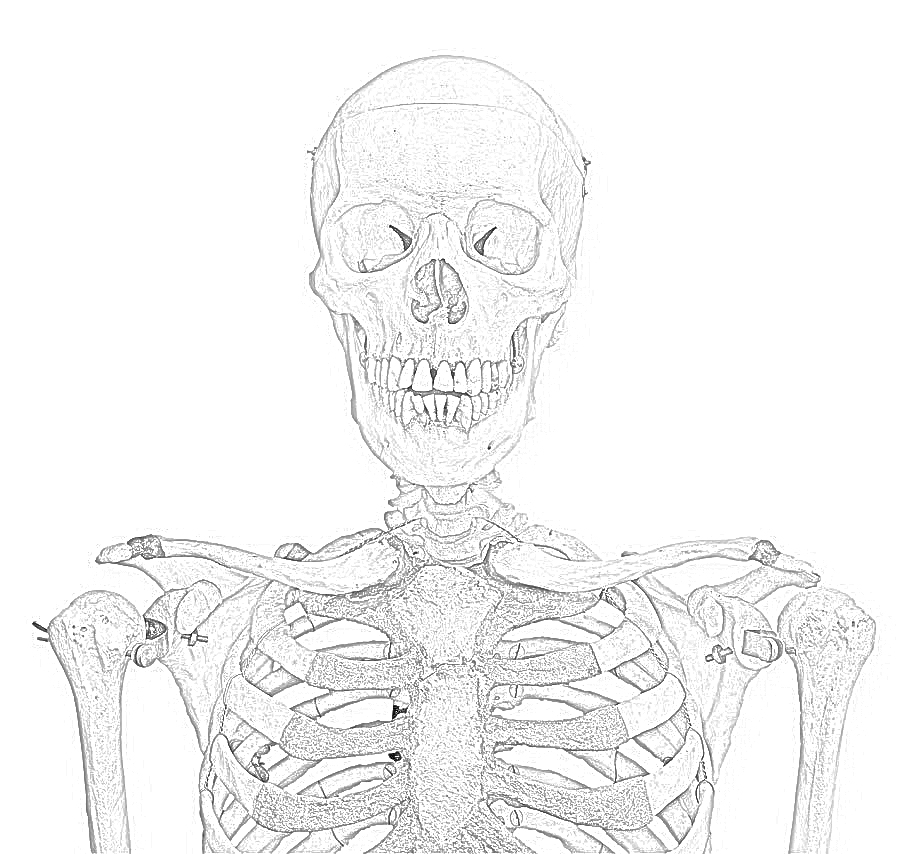 Coloring pages skeleton free printable coloring pages for Skeleton coloring pages to print