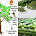 """""""The Miracle Tree Of Life"""" What is it? And What Are The Benefits Of This Wonder Plant?"""