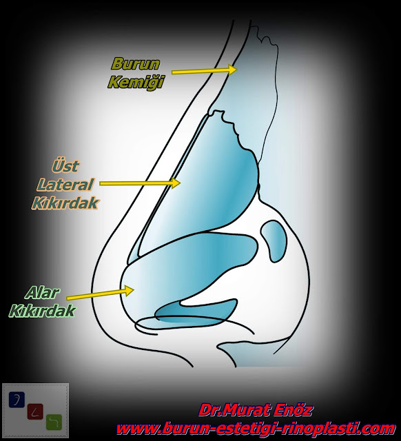 Burun Anatomisi ve Burun Estetiği Ameliyatının Zorlukları