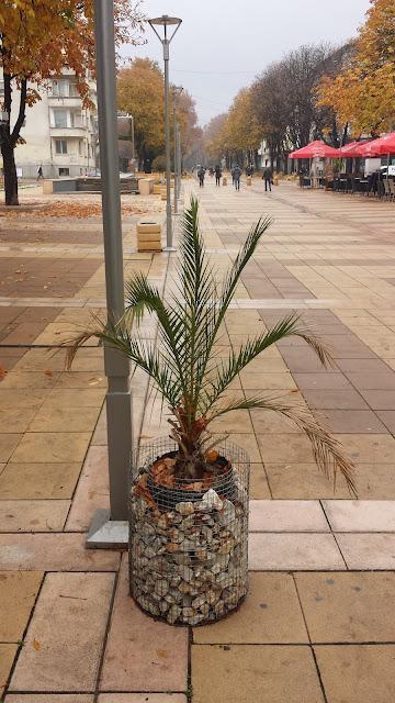 Pot Plant, Going Nowhere, Yambol,