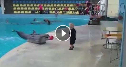 Video of youngster playing with dolphin goes viral
