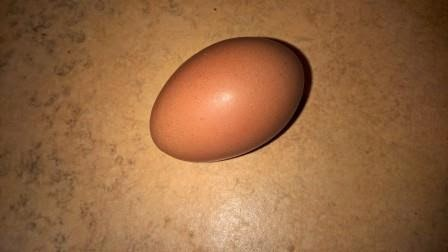 Egg laid by chicken camp chicken