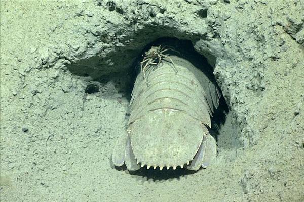 Estranhas criaturas do fundo do mar