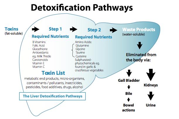 Functional Detox Ingredients Part 4: MSM | Douglas Laboratories