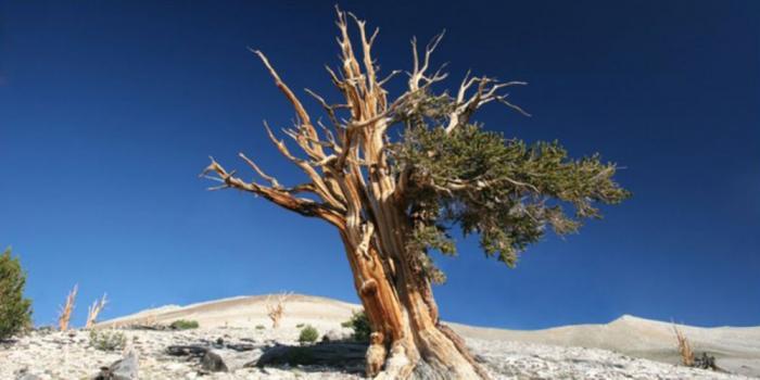 Pohon Yang Kuat