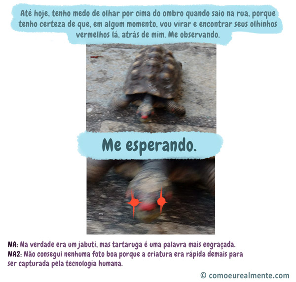 Fim da história do dia em que eu saí de casa e fui atacada por uma tartaruga na rua