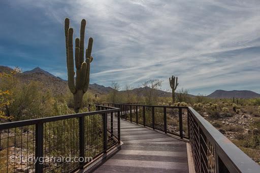 McDowell Sonoran Preserve in Scottsdale, AZ