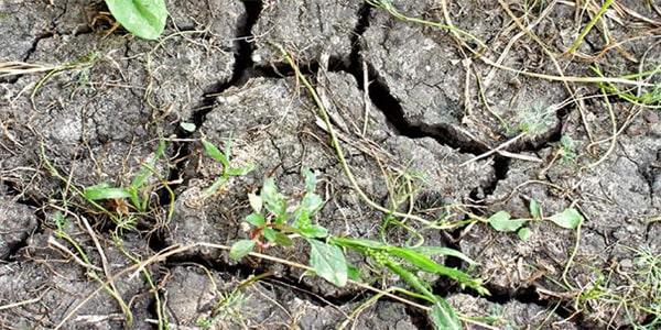 факт о тропическом лесу земельные участки не пригодные для ухаживания