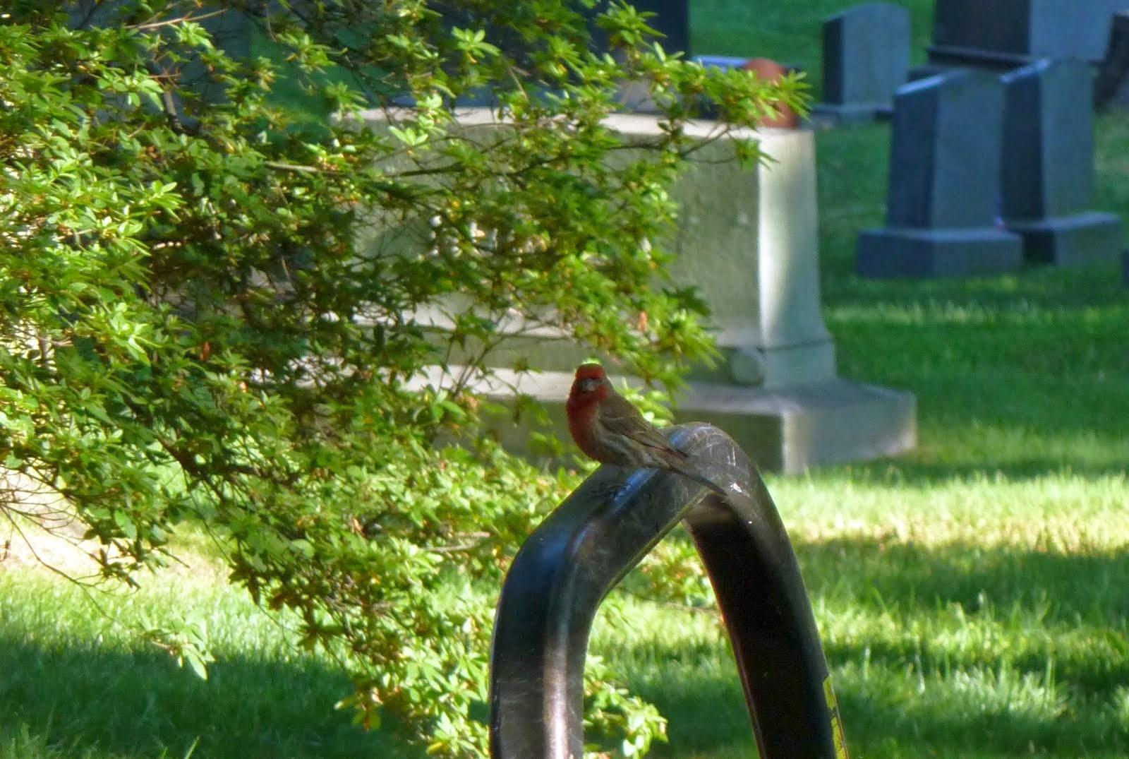 Prospect Park Bird Sightings & North Brooklyn Nature News: June 2014