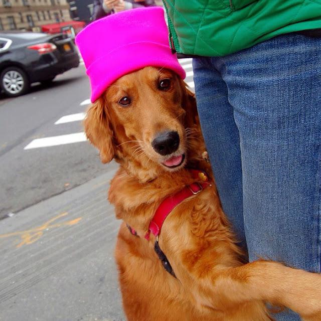 Abrazos y felicidad regala por la calle un perrito labrador
