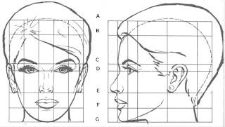 Divisiones para representa la cabeza humana, modelo femenina