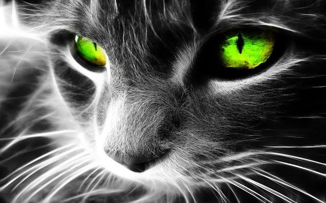 Zwart wit achtergrond met kat met groene ogen