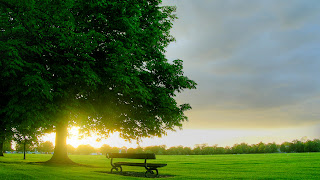 Bench Green Field and SunsetLandscape HD Wallpaper