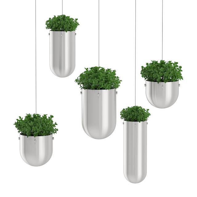 3D model free -  Plants_10