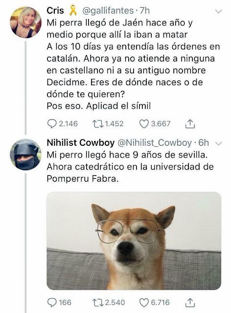 Mi perro llegó hace nueve años de Sevilla. Ahora catedrático en la universidad de Pomperru Fabra