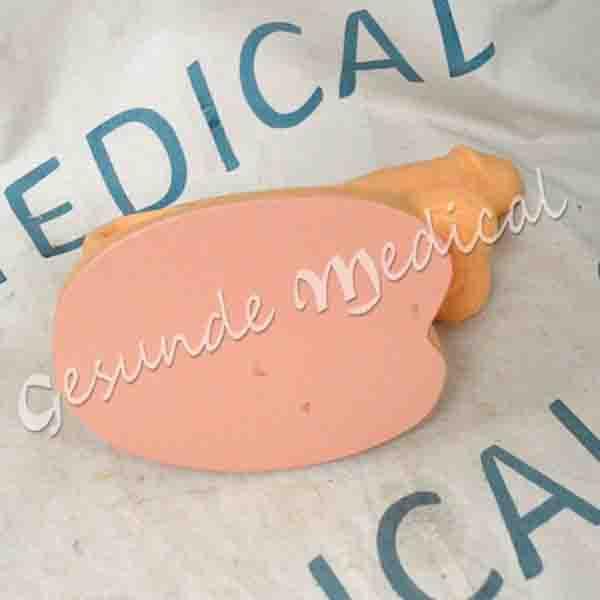 toko torso anatomi organ kelamin pria
