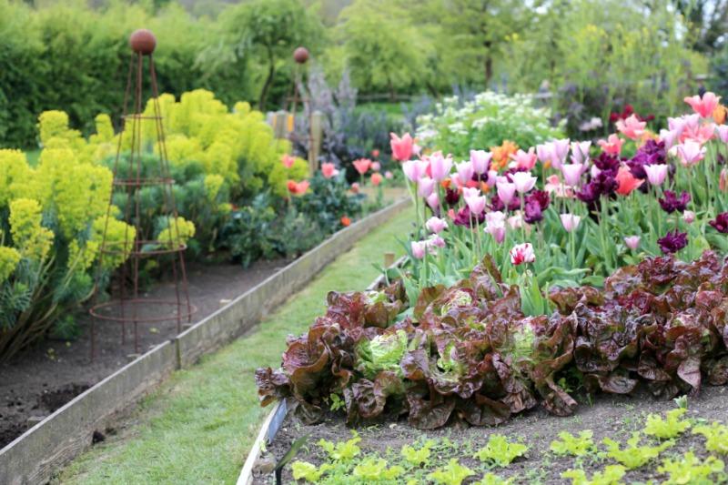 Borduras mixtas con flores y hortalizas