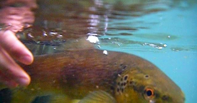 Tramos De Pesca Intensiva De Aragón O2natos Viajes De Pesca A Mosca Vídeos Y Fotos De Pesca A Mosca