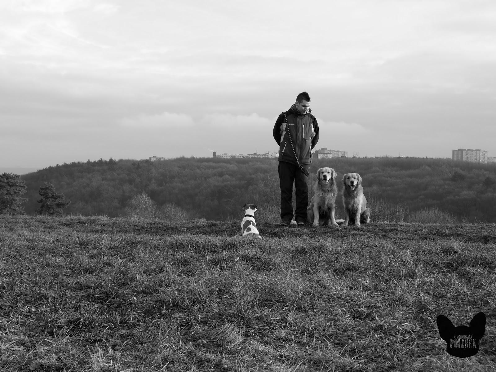veterinář a jeho psi