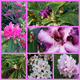 http://mossytrees.blogspot.com/2016/05/may-garden-2016.html