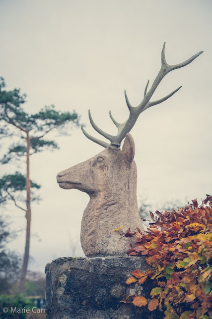 The stag bust at the entrance to Glenveagh National Park