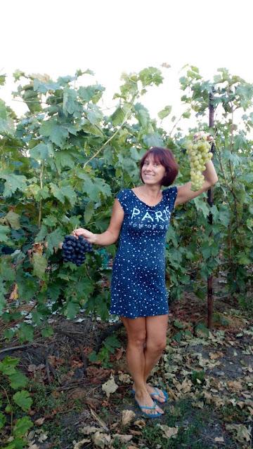 Каталог винограду