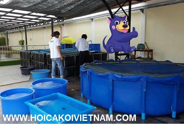 Tank bạt lắp ghép nuôi dưỡng cá koi