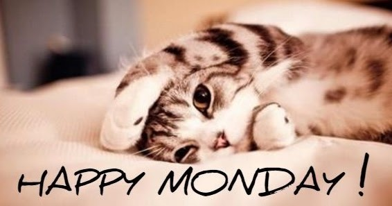 Monday Cat Pictures