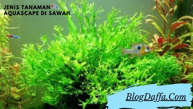 Types of Aquascape Plants in Rice Fields