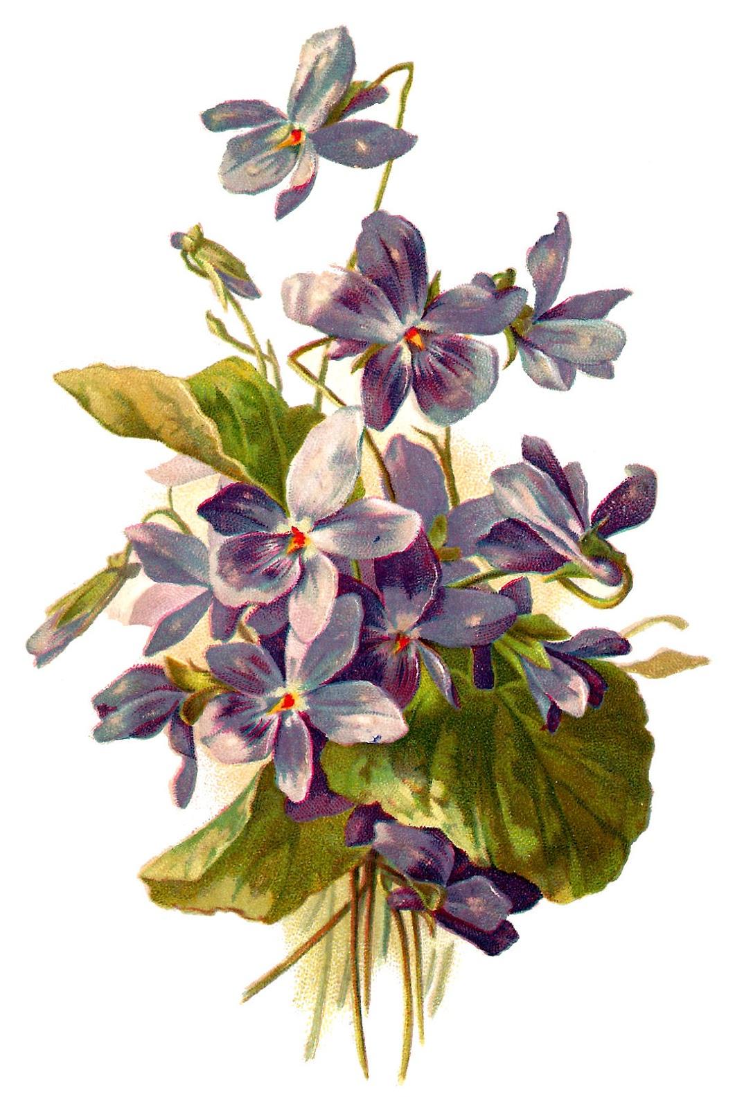 Antique images violet flower download free image for Art flowers