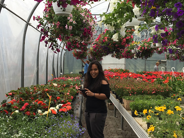 In the greenhouse full of flowers - tracing the paradise