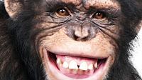 Chega ao Brasil primeira chimpanzé libertada de zoológico por habeas corpus