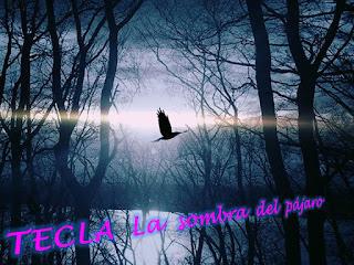 http://misqueridoscuadernos.blogspot.com.es/2017/03/tecla-la-sombra-del-pajaro.html