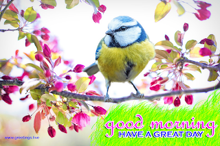 spring bird beautiful nature morning wishes small pink flowers image