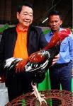 Ayam bangkok juara bersama milyuner thailand